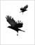 Crows signify selfishness