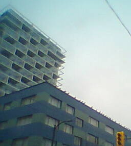 seagulls waiting to move into 1751 pendrell, vancouver
